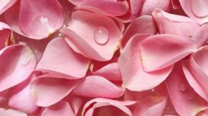 rózsa illatos csodája
