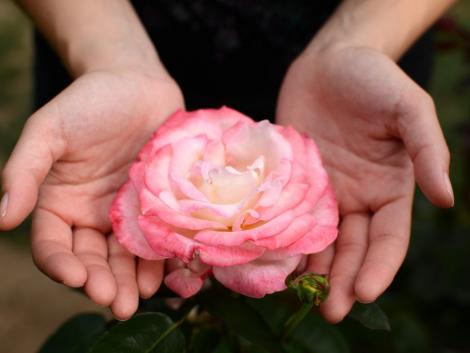 rózsát kézből kézbe