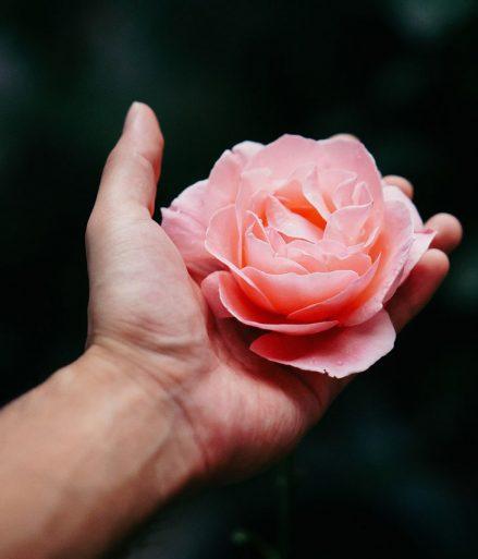 ajandekra vagyo rozsa