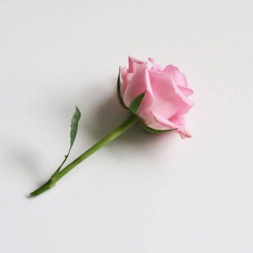 meglepetés rózsából